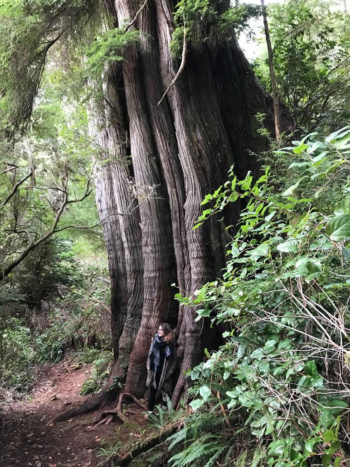 arbre géant 4